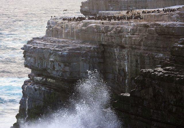 PENGUINS! A Falklands Photo Essay | Edge.org